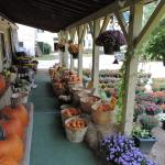 Weston's Farm