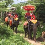 Damnoen Saduak Elephant Village