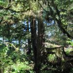 Rainforest Trail Foto