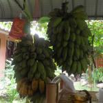 食べ放題バナナ。美味しかったー