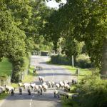 Bramshaw village locals...