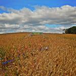 Fort Hill Farms Foto