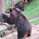 Bärengehege