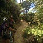 Mountain Biking the Queen Charlotte Track