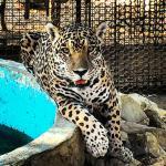 Zoologico de Paraguana