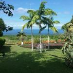 sea view of garden