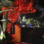 Red Tree at the Entrance