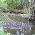 Biotop bei der Glänzelmühle