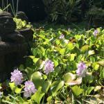 Foto de The Lotus Garden