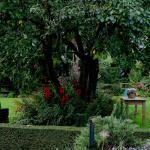The gardens - Wellington Arms