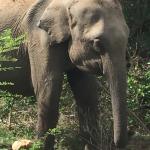 Mahoora Tented Safari Camp - Udawalawe Foto