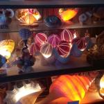 Treasures from the Deep Opal and Shell Museum