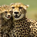 Bestday Safaris - Day Tours