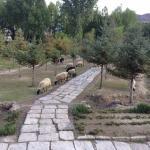 Sheep in the garden.