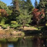 A walk around the pond