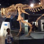 IMAX Melbourne Museum