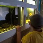 Вот такие аквариумы