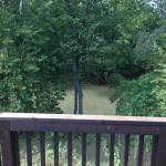 Stream looking down from deck