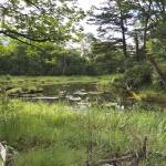 水が少ない池