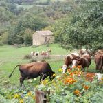 Photo of Agriturismo Grisciano