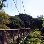 Swinging bridge over Waimea River