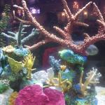 El restaurante tiene unos tanques maravillosos con peces tropicales