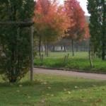 Visit to Parc de la Tete d'Or