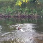 Dogs enjoying the river