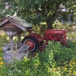 Old tractor hidden in the garden.