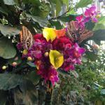 Экзотическе бабочки на диковинных цветах