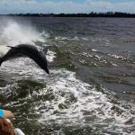 Thriller - Dolphin Watch