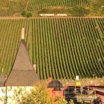 Weingut Clüsserath-Weiler Foto