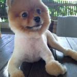 Nice little dog
