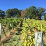 Nashoba Valley Winery Foto
