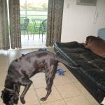My dogs relaxing in the suite room.