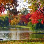 Constitution Gardens: The Mall in Fall