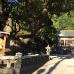 巨木と神社
