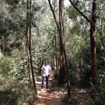 Nairobi Arboretum Foto