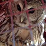 I love the Owls! Especially Oberon the barred owl and Lurch, the turkey vulture. Worth a visit!