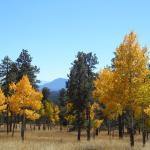 Staunton State Park Foto