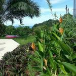 Lookout at Playa Tortuga Foto