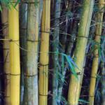 Beginning of the bamboo forest