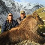 Himalayan Bull Tahr with a Canadian visitor