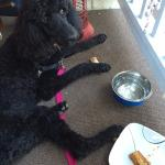 Even my standard poodle was satisfied with the ribs provided by the Cobblestone