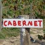 Falkner vineyards