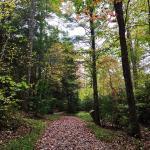 Landscape - Lake Winfield Scott Recreation Area Photo