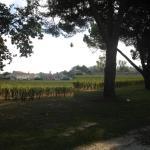 une vue des vignobles