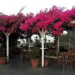 Photo de Anemomilos Restaurant