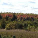 Fall views, soutward
