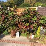 Garnon Bushes garden, Oct 2015